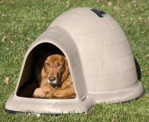 Магазин товаров для собак спб