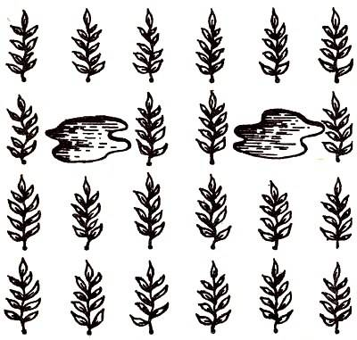 Правильное выращивания перцев в теплице