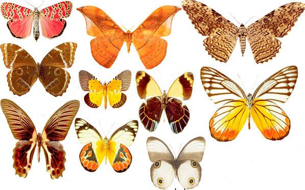 Украшение стен бабочками своими руками из газет и глины