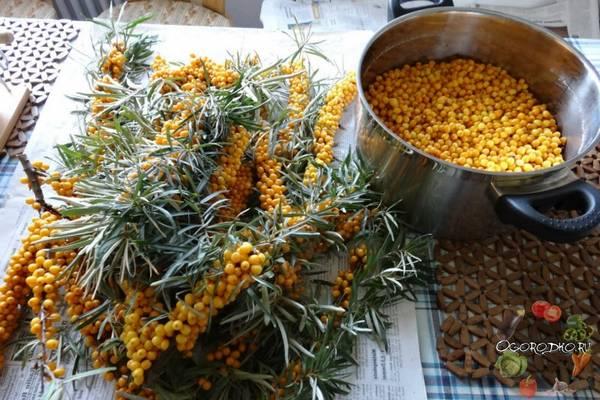 заготовка облепихи на зиму рецепты