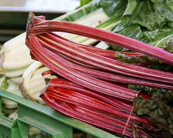 Свекла Мангольд: особенности выращивания и ухода