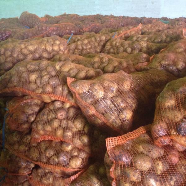 Повышаем урожай картофеля с сотки, превышая среднюю урожайность