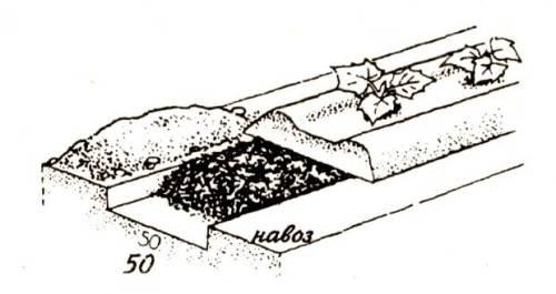 Особенности посадки растений в теплице