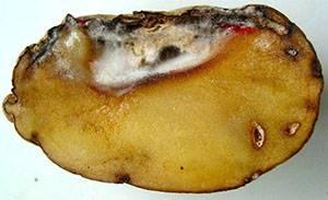 Фото и описание болезней картофеля