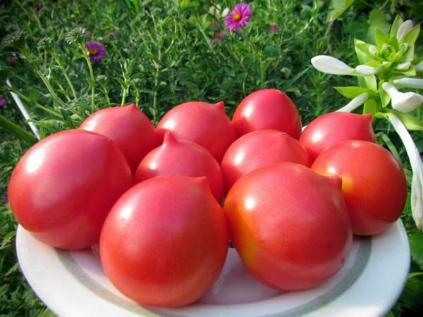 Самые лучшие сорта томатов: характеристика и описание