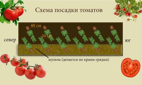 Хотите хороший урожай томатов - получите